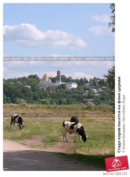 Стадо коров пасется на фоне церкви, фото № 233121, снято 21 июня 2007 г. (c) Елена Блохина / Фотобанк Лори