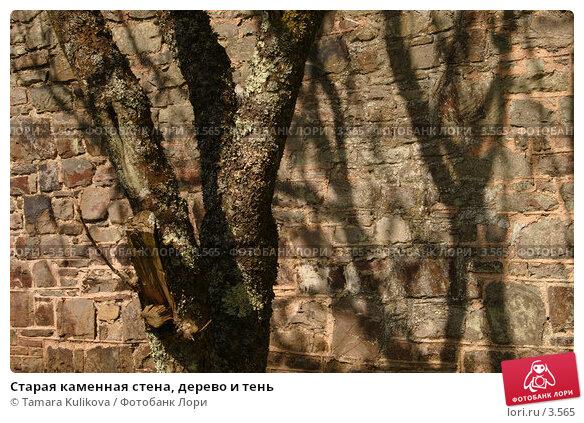 Старая каменная стена, дерево и тень, фото № 3565, снято 5 июня 2006 г. (c) Tamara Kulikova / Фотобанк Лори