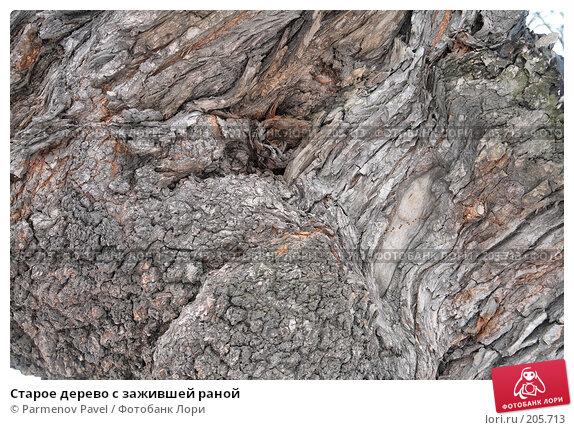 Старое дерево с зажившей раной, фото № 205713, снято 6 февраля 2008 г. (c) Parmenov Pavel / Фотобанк Лори