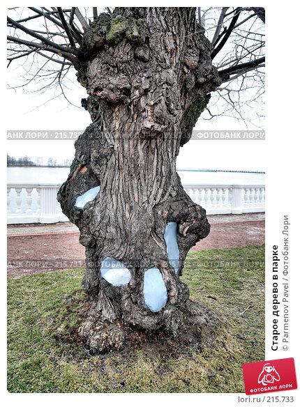 Старое дерево в парке, фото № 215733, снято 13 февраля 2008 г. (c) Parmenov Pavel / Фотобанк Лори