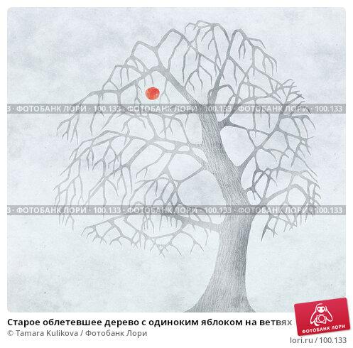 Старое облетевшее дерево с одиноким яблоком на ветвях, иллюстрация № 100133 (c) Tamara Kulikova / Фотобанк Лори
