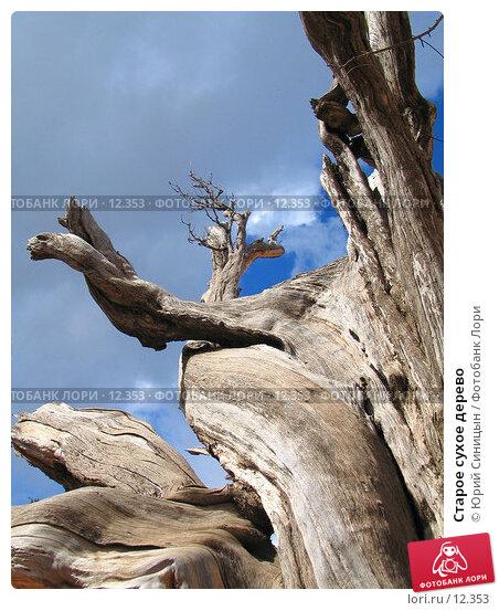 Старое сухое дерево, фото № 12353, снято 29 сентября 2006 г. (c) Юрий Синицын / Фотобанк Лори