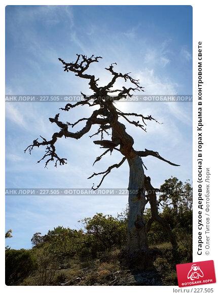 Старое сухое дерево (сосна) в горах Крыма в контровом свете, фото № 227505, снято 18 сентября 2006 г. (c) Олег Титов / Фотобанк Лори