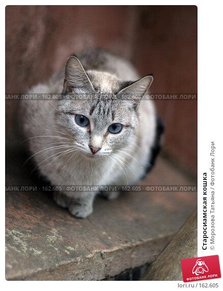 Старосиамская кошка, фото № 162605, снято 28 марта 2004 г. (c) Морозова Татьяна / Фотобанк Лори