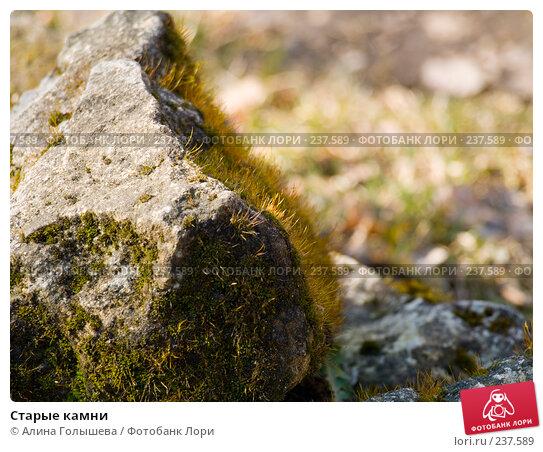 Купить «Старые камни», эксклюзивное фото № 237589, снято 21 апреля 2018 г. (c) Алина Голышева / Фотобанк Лори