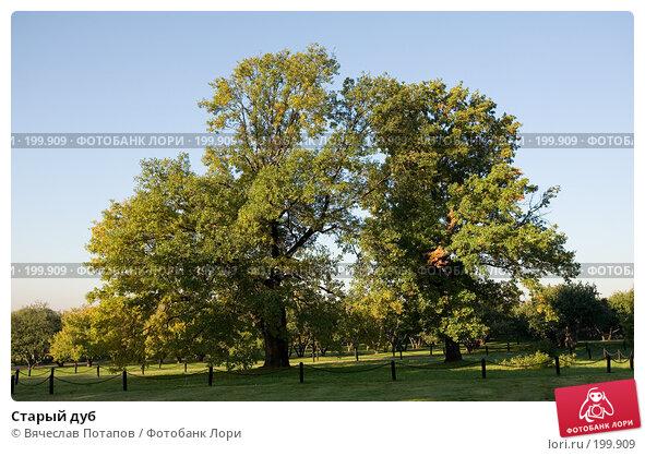 Старый дуб, фото № 199909, снято 22 сентября 2007 г. (c) Вячеслав Потапов / Фотобанк Лори