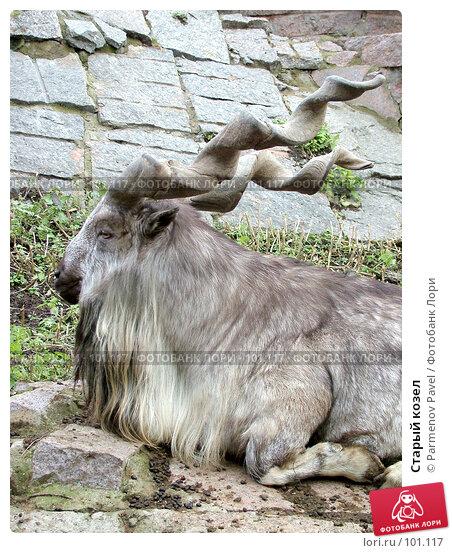 Купить «Старый козел», фото № 101117, снято 8 ноября 2004 г. (c) Parmenov Pavel / Фотобанк Лори