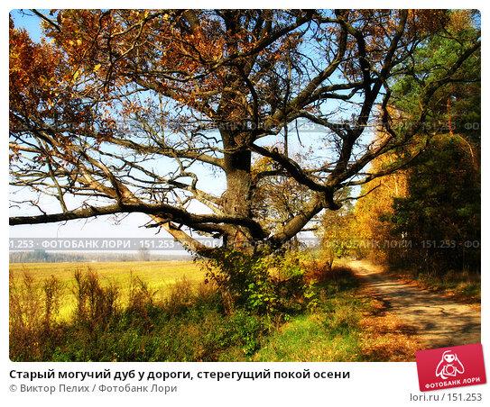 Купить «Старый могучий дуб у дороги, стерегущий покой осени», фото № 151253, снято 23 октября 2006 г. (c) Виктор Пелих / Фотобанк Лори