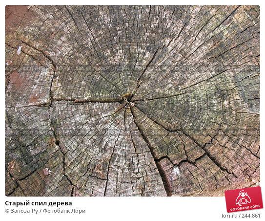 Старый спил дерева, фото № 244861, снято 12 августа 2007 г. (c) Заноза-Ру / Фотобанк Лори