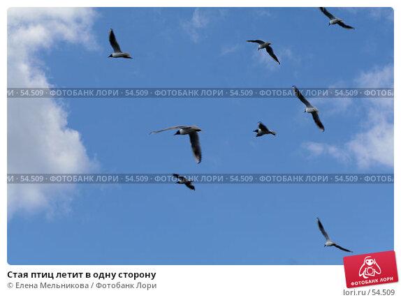 Стая птиц летит в одну сторону, фото № 54509, снято 16 июня 2007 г. (c) Елена Мельникова / Фотобанк Лори
