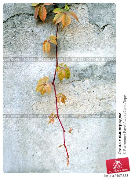 Купить «Стена с виноградом», фото № 107853, снято 25 октября 2007 г. (c) Parmenov Pavel / Фотобанк Лори