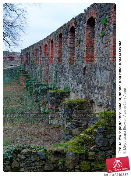 Стена Ужгородского замка,поросшая плющом и мхом, фото № 246337, снято 24 марта 2008 г. (c) Мирослава Безман / Фотобанк Лори