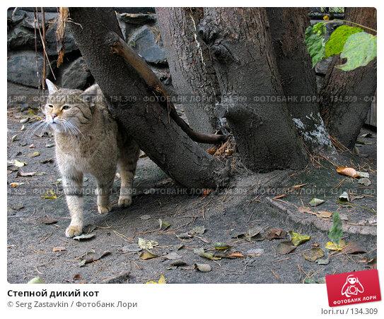 Степной дикий кот, фото № 134309, снято 10 октября 2004 г. (c) Serg Zastavkin / Фотобанк Лори