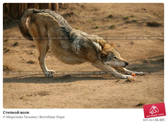 Степной волк, фото № 68485, снято 31 марта 2007 г. (c) Морозова Татьяна / Фотобанк Лори