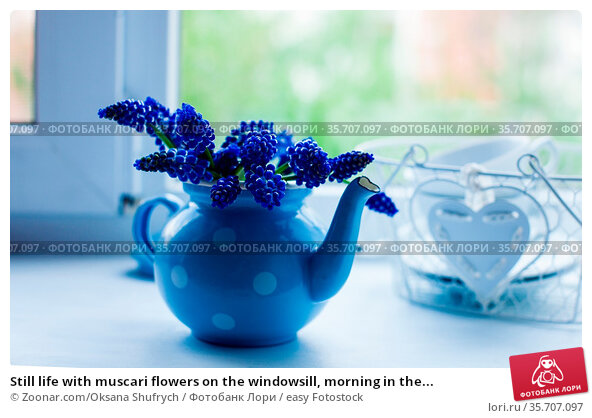Still life with muscari flowers on the windowsill, morning in the... Стоковое фото, фотограф Zoonar.com/Oksana Shufrych / easy Fotostock / Фотобанк Лори