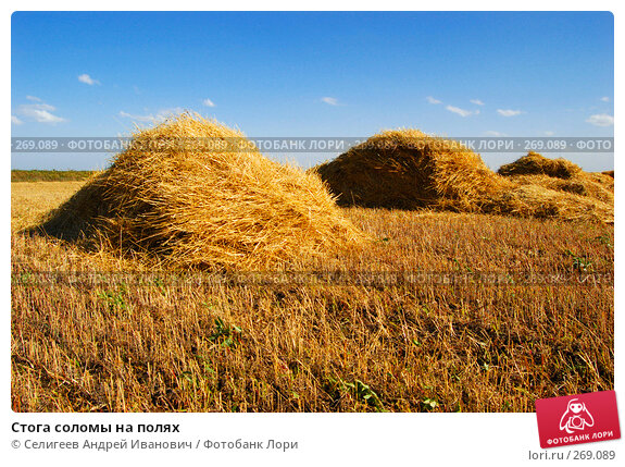 Стога соломы на полях, фото № 269089, снято 18 сентября 2006 г. (c) Селигеев Андрей Иванович / Фотобанк Лори