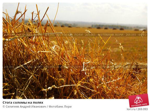 Стога соломы на полях, фото № 269093, снято 18 сентября 2006 г. (c) Селигеев Андрей Иванович / Фотобанк Лори
