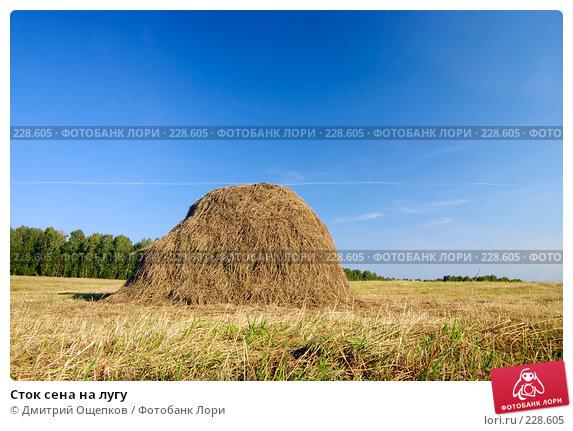 Сток сена на лугу, фото № 228605, снято 2 сентября 2007 г. (c) Дмитрий Ощепков / Фотобанк Лори