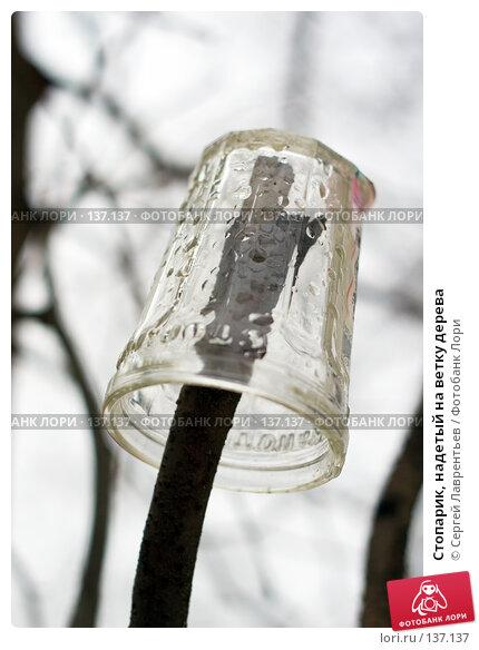 Стопарик, надетый на ветку дерева, фото № 137137, снято 4 декабря 2007 г. (c) Сергей Лаврентьев / Фотобанк Лори