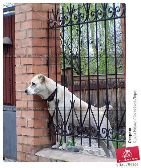 Сторож, фото № 54609, снято 13 мая 2006 г. (c) Julia Nelson / Фотобанк Лори