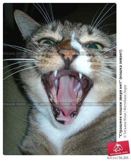 """""""Страшнее кошки зверя нет"""" (кошка зевает), фото № 56265, снято 28 июня 2007 г. (c) Татьяна Юни / Фотобанк Лори"""