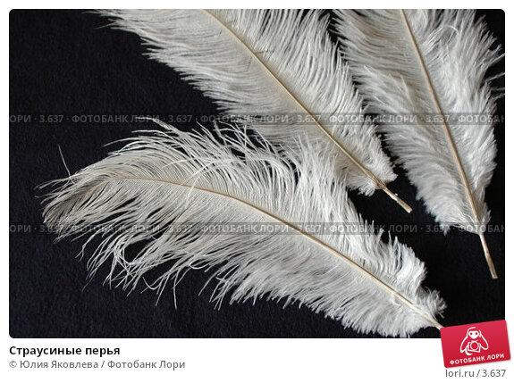Страусиные перья, фото № 3637, снято 13 апреля 2006 г. (c) Юлия Яковлева / Фотобанк Лори
