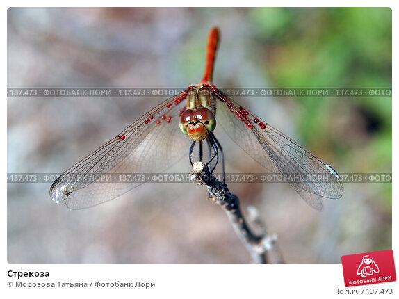 Стрекоза, фото № 137473, снято 9 августа 2004 г. (c) Морозова Татьяна / Фотобанк Лори