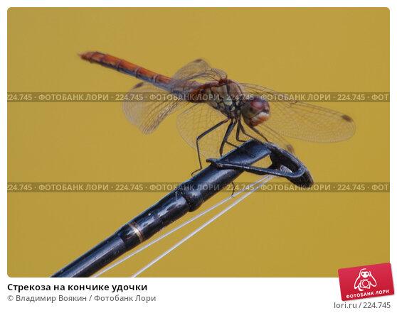 Стрекоза на кончике удочки, фото № 224745, снято 14 августа 2005 г. (c) Владимир Воякин / Фотобанк Лори