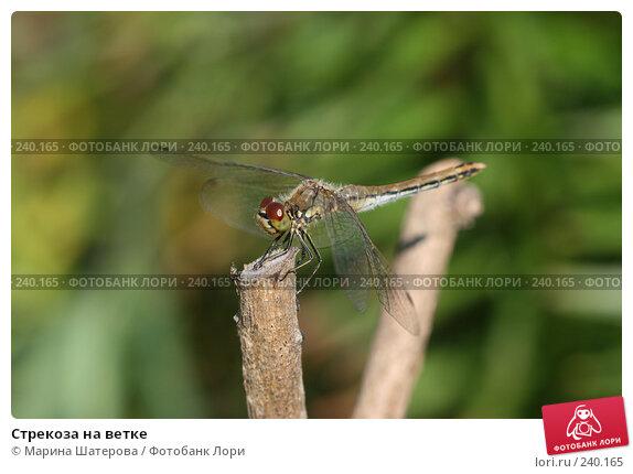 Стрекоза на ветке, фото № 240165, снято 10 августа 2007 г. (c) Марина Шатерова / Фотобанк Лори