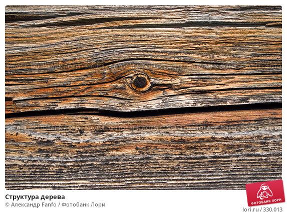 Структура дерева, фото № 330013, снято 23 июля 2017 г. (c) Александр Fanfo / Фотобанк Лори