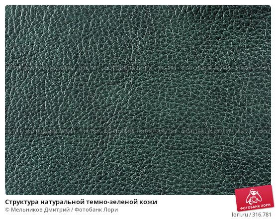 Купить «Структура натуральной темно-зеленой кожи», фото № 316781, снято 11 мая 2008 г. (c) Мельников Дмитрий / Фотобанк Лори