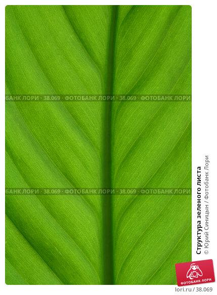 Структура зеленого листа, фото № 38069, снято 18 февраля 2007 г. (c) Юрий Синицын / Фотобанк Лори
