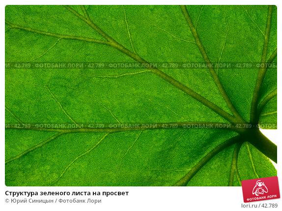 Структура зеленого листа на просвет, фото № 42789, снято 18 февраля 2007 г. (c) Юрий Синицын / Фотобанк Лори