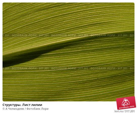 Купить «Структуры. Лист лилии», фото № 317201, снято 2 мая 2006 г. (c) A Челмодеев / Фотобанк Лори