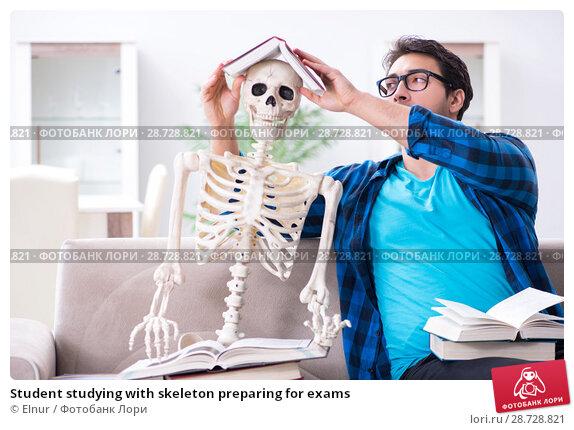 Купить «Student studying with skeleton preparing for exams», фото № 28728821, снято 8 марта 2018 г. (c) Elnur / Фотобанк Лори