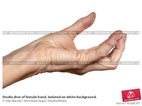Studio shot of female hand. Isolated on white background. Стоковое фото, фотограф Filip Warulik / PantherMedia / Фотобанк Лори