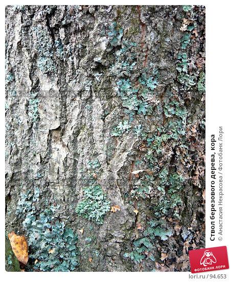 Ствол березового дерева, кора, фото № 94653, снято 30 сентября 2007 г. (c) Анастасия Некрасова / Фотобанк Лори