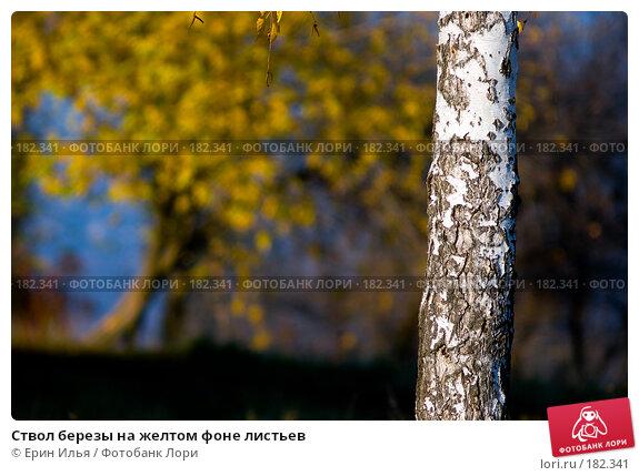 Ствол березы на желтом фоне листьев, фото № 182341, снято 28 октября 2007 г. (c) Ерин Илья / Фотобанк Лори