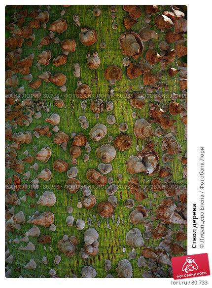 Купить «Ствол дерева», фото № 80733, снято 20 августа 2007 г. (c) Лифанцева Елена / Фотобанк Лори