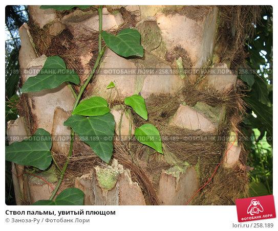 Ствол пальмы, увитый плющом, фото № 258189, снято 12 апреля 2008 г. (c) Заноза-Ру / Фотобанк Лори