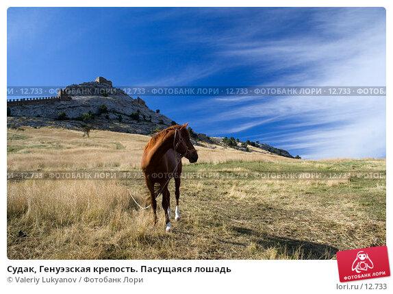 Купить «Судак, Генуэзская крепость. Пасущаяся лошадь», фото № 12733, снято 11 сентября 2006 г. (c) Valeriy Lukyanov / Фотобанк Лори