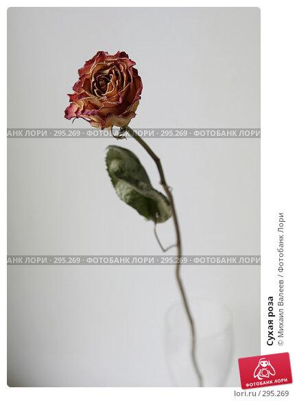 Купить «Сухая роза», фото № 295269, снято 25 июля 2007 г. (c) Михаил Валеев / Фотобанк Лори