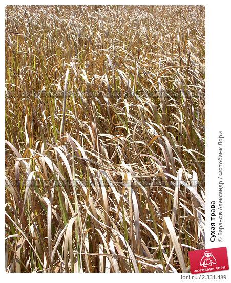 Сухая трава. Стоковое фото, фотограф Баранов Александр / Фотобанк Лори