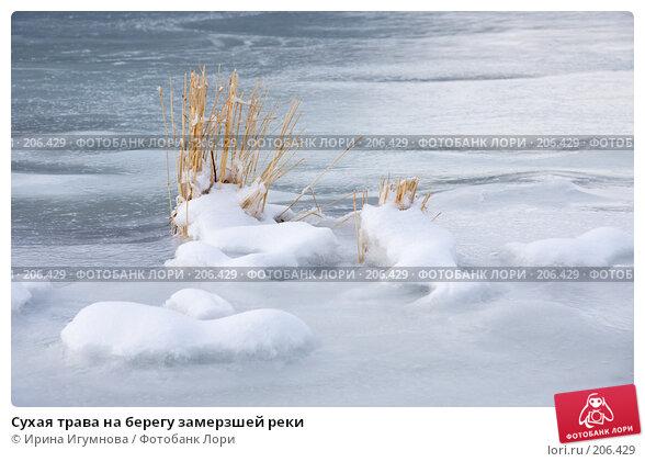 Сухая трава на берегу замерзшей реки, фото № 206429, снято 2 января 2008 г. (c) Ирина Игумнова / Фотобанк Лори
