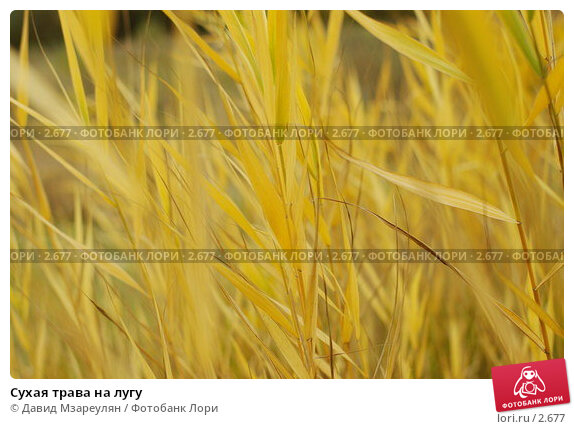 Сухая трава на лугу, фото № 2677, снято 14 октября 2004 г. (c) Давид Мзареулян / Фотобанк Лори