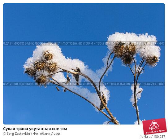 Сухая трава укутанная снегом, фото № 130217, снято 18 декабря 2005 г. (c) Serg Zastavkin / Фотобанк Лори