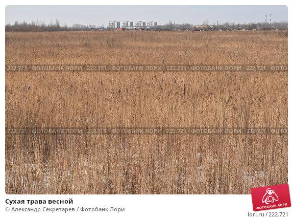 Сухая трава весной, фото № 222721, снято 10 марта 2008 г. (c) Александр Секретарев / Фотобанк Лори