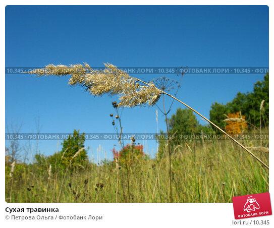 Сухая травинка, фото № 10345, снято 28 сентября 2006 г. (c) Петрова Ольга / Фотобанк Лори