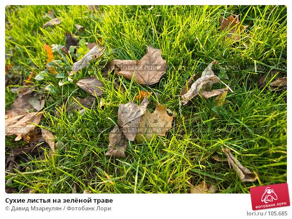 Сухие листья на зелёной траве, фото № 105685, снято 29 октября 2007 г. (c) Давид Мзареулян / Фотобанк Лори
