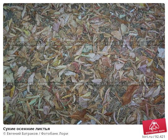 Сухие осенние листья, фото № 92421, снято 9 октября 2005 г. (c) Евгений Батраков / Фотобанк Лори